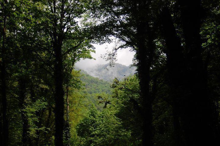 Lagodeski Park Narodowy