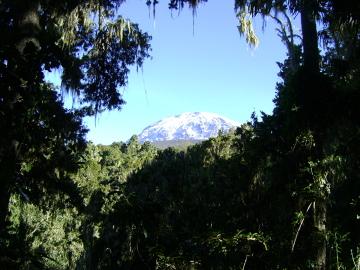 Kilimandżaro: szczyty widziane z poziomu lasu deszczowego