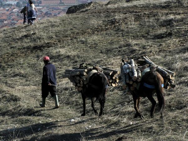 W niektórych górskich regionach Macedonii wciąż głównym środkiem transportu ludzi i materiałów są zwierzęta - osły, muły i konie. Tylko one są w stanie przedrzeć się przez skaliste zbocza i wąwozy.