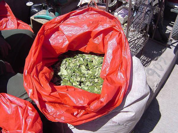 Koka – w pogoni za zielonym złotem