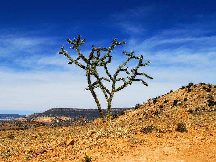 Meksyk – dwa światy, jedna kultura