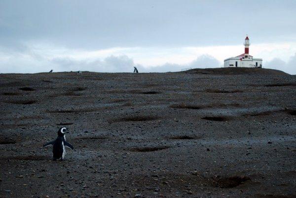 To już prawie koniec świata – Wyspa Magdalena o świcie
