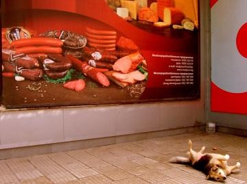 Sofia - Co mu się śni..? :) - Stałym elementem miast są także wszędobylskie psy. Nie są one groźne, raczej leniwie spędzają czas i nie zaczepiają ludzi.