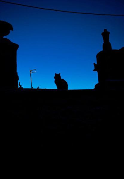 Wszędobylskie Koty są nierozłącznym elementem wysp Sporades