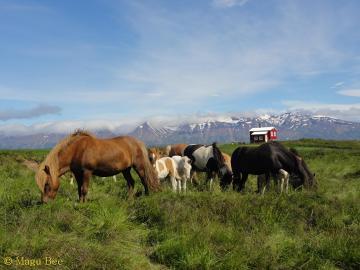 Isladzka idylla i najbardziej typowy krajobraz wybrzeża.