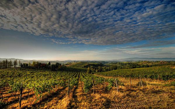 Lokalne wina i winnice są często jednym z głównych powodów, dla których odwiedzają to miejsce turyści.