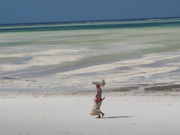 Oddalając się niespełna kilometr od brzegów wyspy, na przykład łodzią żaglową, które miejscowi chętnie wynajmują turystom, można podziwiać rafę koralową.