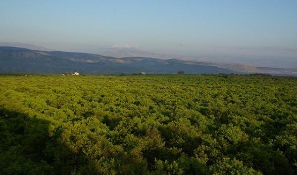 Widok na dolinę Jordanu