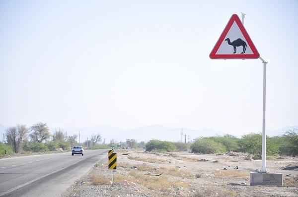 Co kraj to obyczaj. Znaki drogowe zaskakują nie tylko językiem czy nawet sposobem zapisywania cyfr ale także obrazkami. W starciu z wielbłądem nawet jadąc europejskimi bezpiecznymi samochodami chyba dużych szans by nie było.
