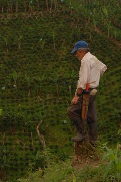 Spalona przez słońce skóra i grube odciski mówią same za siebie. Ten człowiek spędził życie doglądając plantacji, na której pracuje i innych w okolicy. Trud fizycznej pracy uczynił go twardym i niechętnym obcym, szczególnie tym z aparatami fotograficznymi.Zbocza w tle poza krzakami kawy pokrywają bananowce.