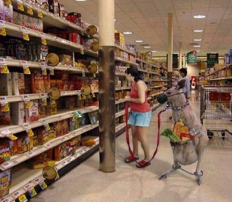 Kangurzyca na zakupach w centrum handlowym. Na zdjęciu zrobionym ukrytym aparatem widać atrybuty kolonialnego zniewolenia.