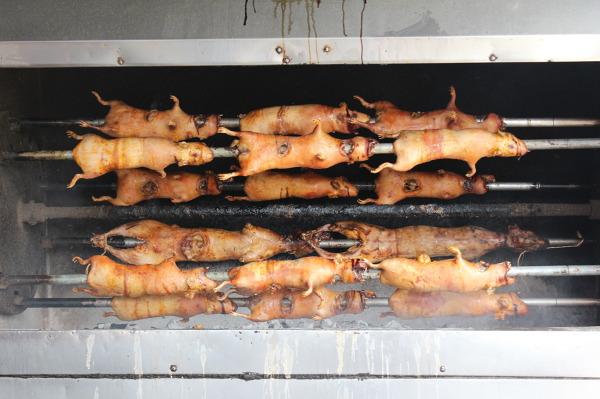 Ekwadorski przysmak - pieczona świnka morska