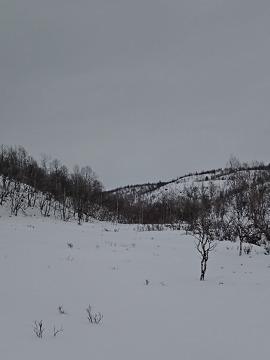 Właśnie tutaj zaczyna się kanion prowadzący do rzeki Lemmenjoki.