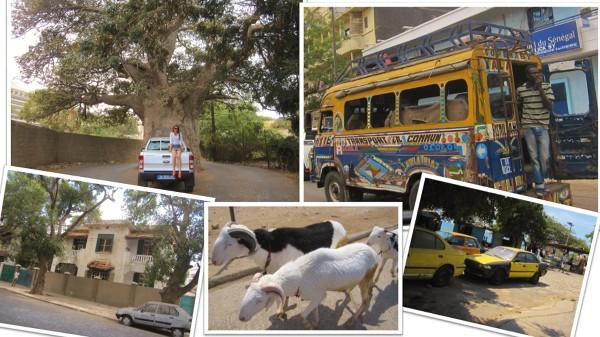 Dakar – w mieście: baobab, autobus, upadła willa, kozy, taksówki