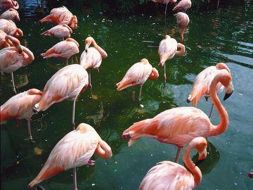 Flamingi - znak rozpoznawczy Miami.