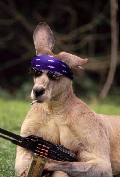 Bojownik Kangurzego Ruchu Oporu, okopany gdzieś pod Adelajdą, wypatruje nieostrożnych Aussies.