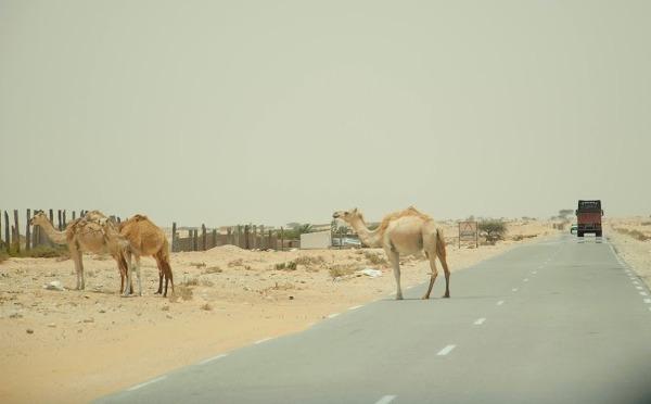 Na drogach Mauretanii