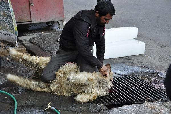 """Aszura to święto, które wszyscy szyici spędzają gromadnie. Na ulicach rozstawiane są jadłodajnie, gdzie posiłki wydawane są wszystkim za darmo. By nadążyć z przygotowaniem dań zwierzęta zabijane są wprost na ulicach. Wszystko oczywiście odbywa się """"halal""""."""