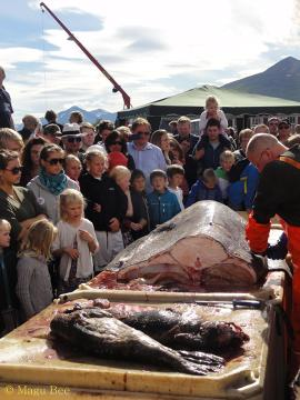 Chcących nauczyć się oprawy mięsa rekina zapraszam do Dalvik na coroczny  Fiskidagurinn Mikli.
