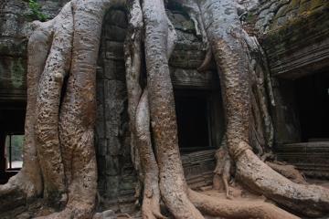 Jedna ze świątyń w kompleksie Angkoru