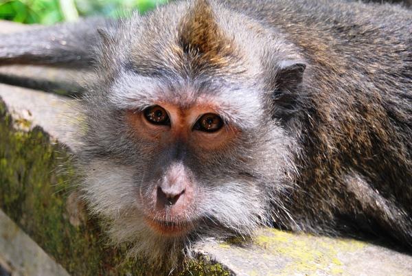 Bali - Ubud - Małpi Gaj