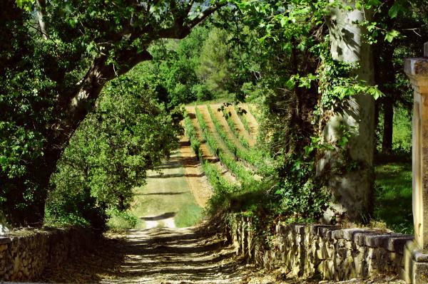 Winnica w Luberon