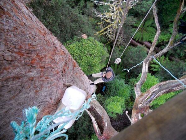 wspinając się na drzewo