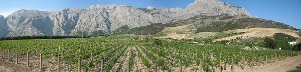 Winnica w Chorwacji