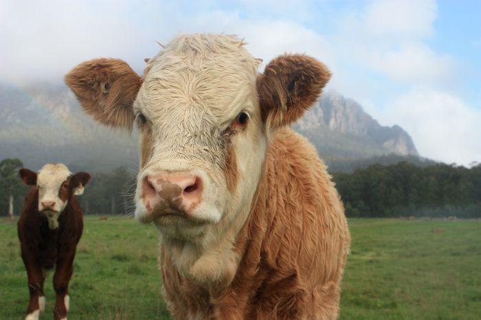 Tastrail – 479 km australijskiej przygody