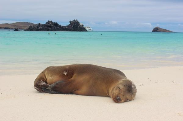 Galapagos, Isla Española - tu nawet lwy morskie się uśmiechają