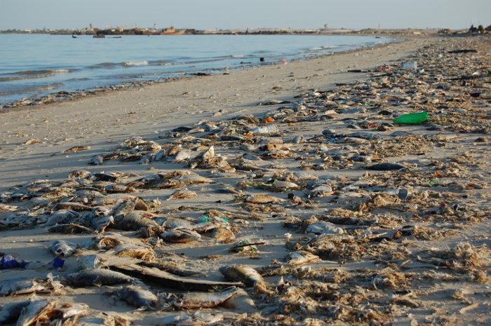 Plaża w Nouadhibbou