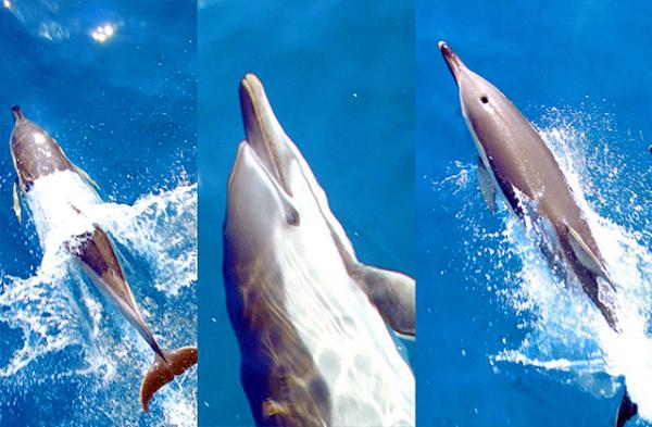 Podczas rejsu po Morzu Egejskim można spotkać delfiny