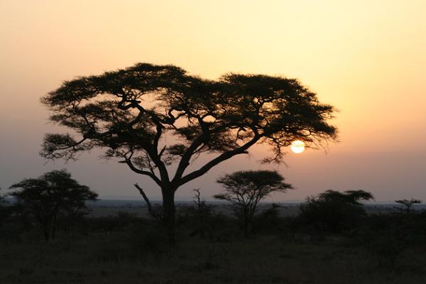 O wschodzie słońca na Serengeti – Tanzania