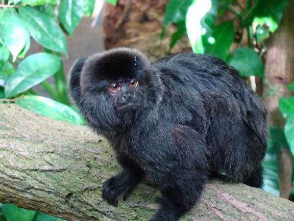 Małpka z Uniwersum