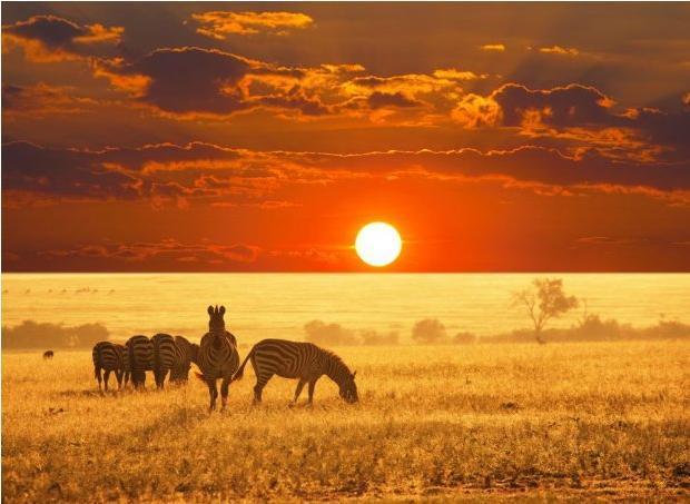 Kolory Tanzanii