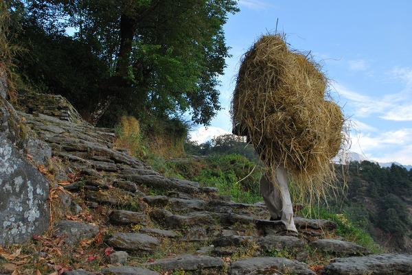 Tragarz niosący paszę dla krów, Annapurna