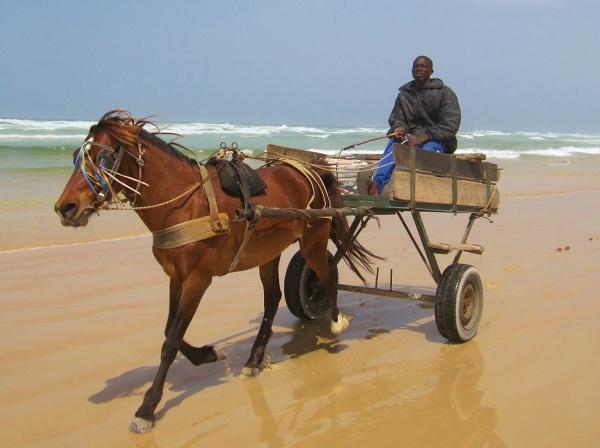 Najpiękniejsza plaża w Dakarze