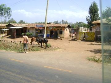 W drodze do bramy Machame