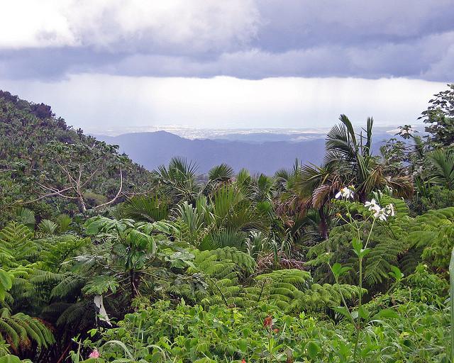 Wyspa Zauroczenia – Puerto Rico