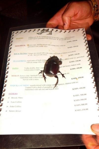 Wyjątkowo okazały kenijski chrząszcz