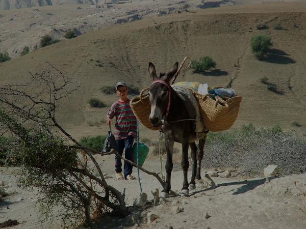 Mały mieszkaniec marokańskich gór