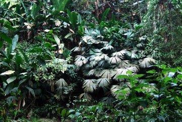 Trekking do Ciudad Perdida przez dżunglę