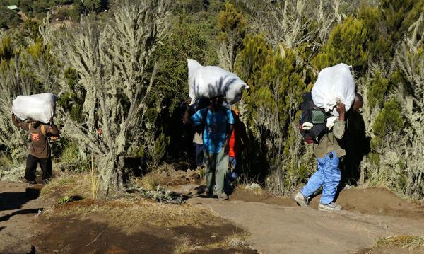Tragarze na szlaku do obozu drugiego, Kilimandżaro