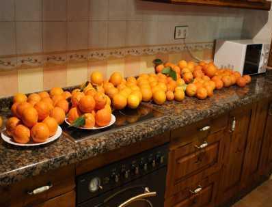 Pomarańczowe zbiory! Już za chwilę powstanie z nich najlepszy sok na świecie!