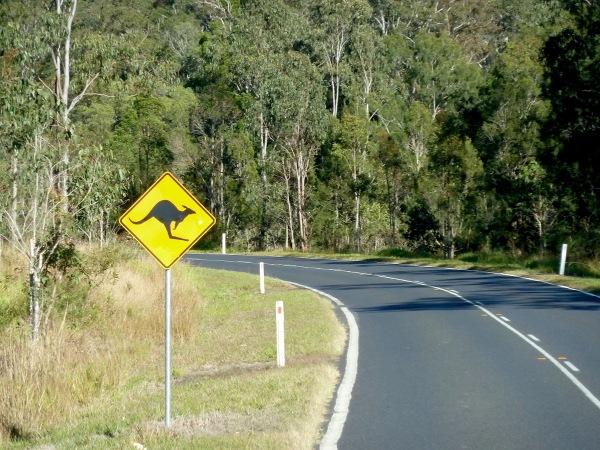 i jak to w Australii bywa, takie znaki widziałam przy szosie cały czas