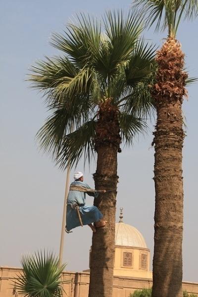 Przycinanie palmy