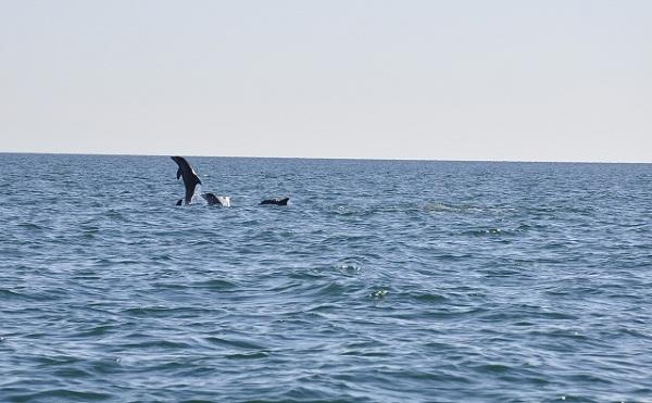 Pomimo praktycznie braku możliwości plażowania wybrzeże Iranu potrafi dostarczyć jednak wrażeń. Na usłanych kolorowymi muszlami plażach wygrzewają się kraby a temperatura wody zdecydowanie cieszy liczne delfiny.