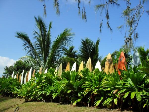 Sanktuarium surfboardow-Maui