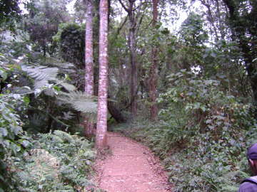 Pierwsze piętro: las deszczowy. Ścieżkę zrobiono po ty, by w razie ulewy ludzie nie zjeżdżali wraz z błotem