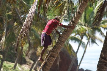 Pan na palmie